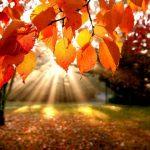 Самарик и Осень