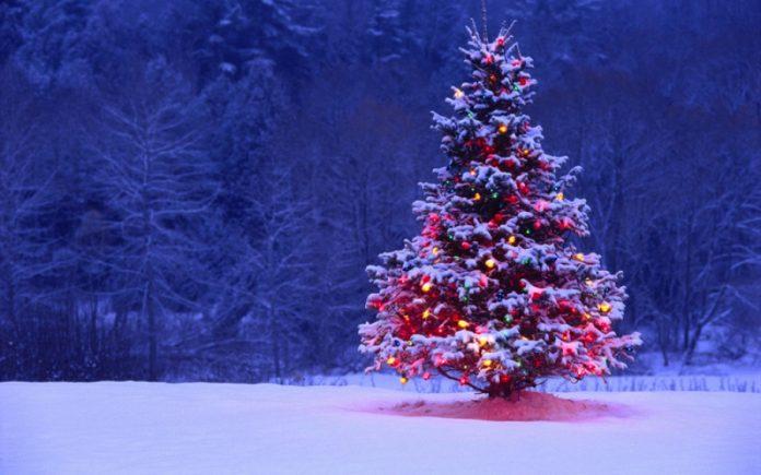 Самарик и елки