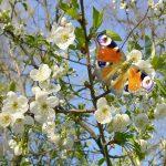 Самарик и Весна
